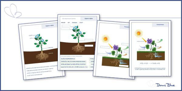 Dijelovi biljke. Fotosinteza-