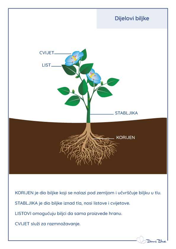 Dijelovi biljke: cvijet, stabljika, list i korijen.