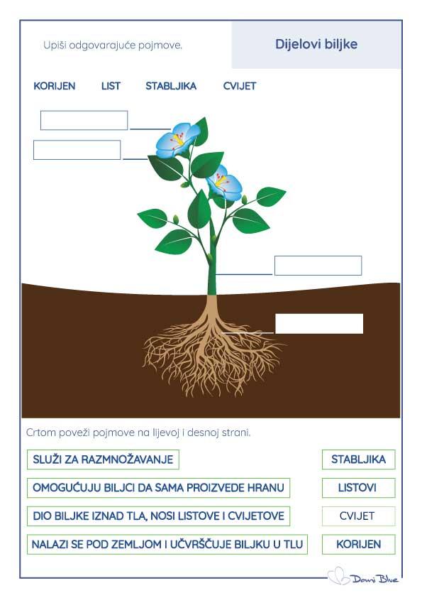 Dijelovi biljke radni listić.