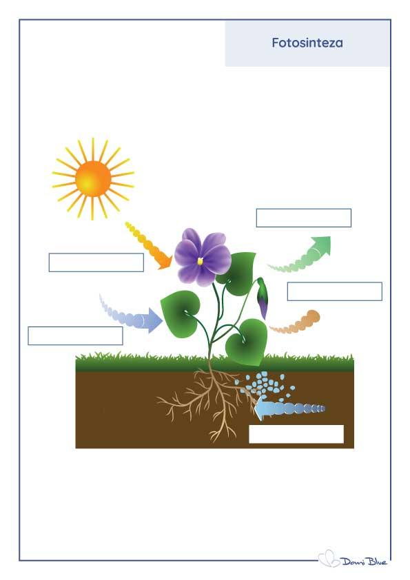 Fotosinteza listić za popunjavanje pojmova.